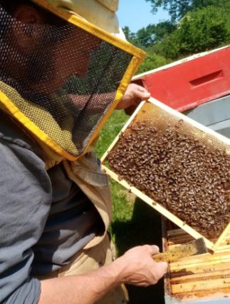 Ph l'APEritiva – apicoltura nomade